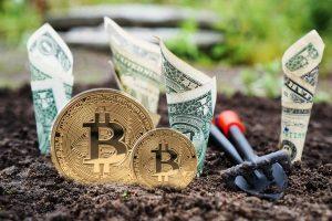 Płatność w Bitcoin Cash