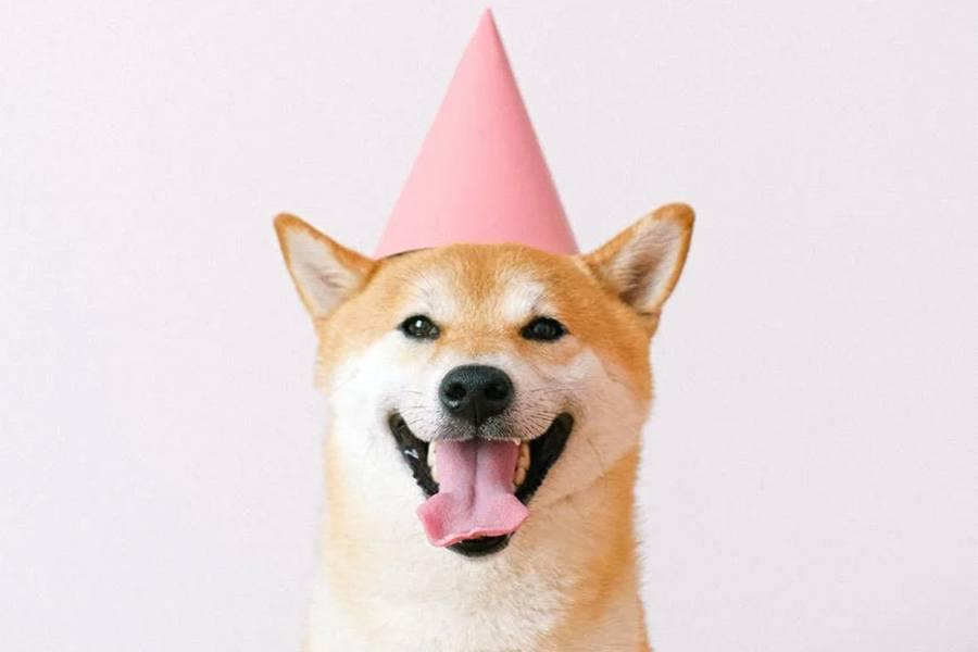 Pieseł Dogecoin - Shiba